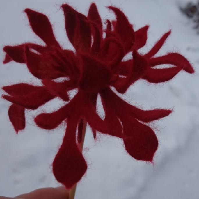 Eiskristallblüte